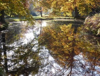 03 Herbstimpression 800 Pixel verkleinert