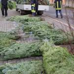 weihnachtsbaum2015_006