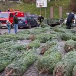 weihnachtsbaum2015_011