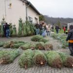 weihnachtsbaum2015_012