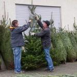 weihnachtsbaum2015_013
