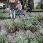 weihnachtsbaum2015_014