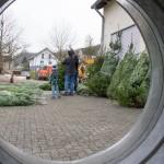 weihnachtsbaum2015_016
