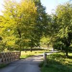Brücke Wildparkeingang