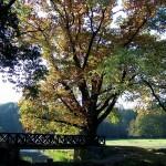 Wildparkbrücke Gegenlicht
