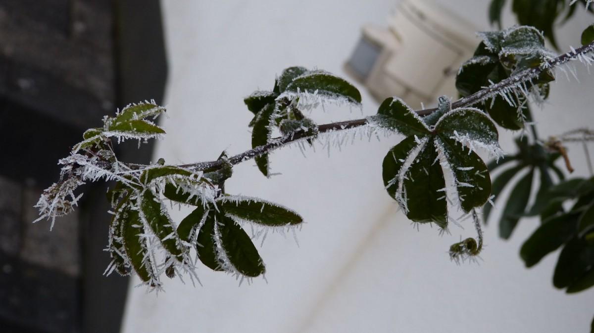 j winterliche dekorationen (8)