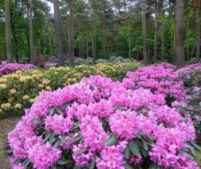 Blumen_BA1a